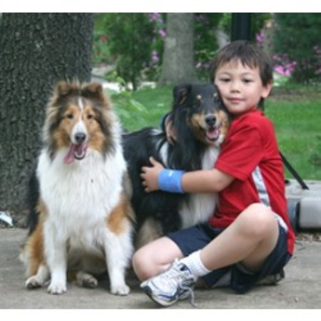 Sheltie breeder in Damascus, Pennsylvania