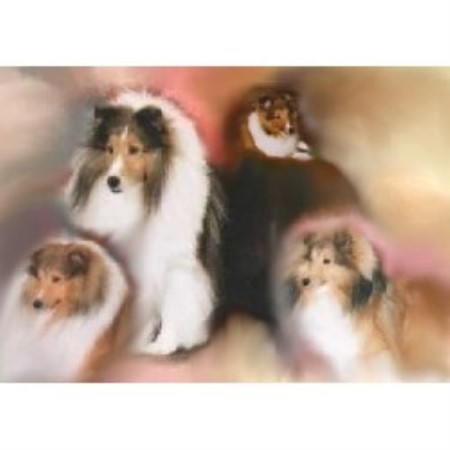 Krislyn Shelties