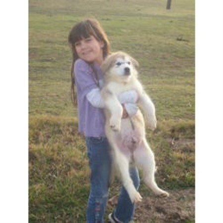 We Found Alaskan Malamute Breeders In the Following States and ...