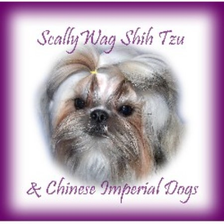 Scallywag Shih Tzu Shih Tzu Breeder In Salt Lake City Utah
