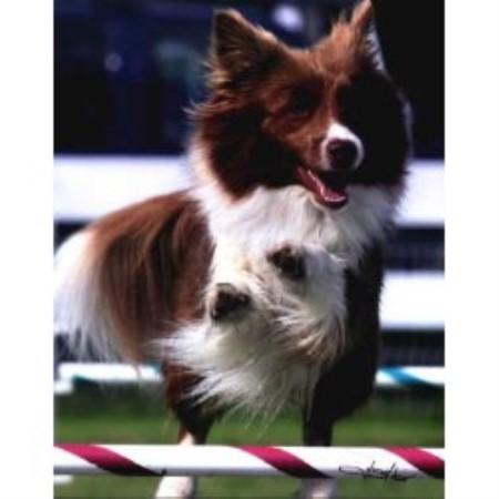 border-collie-puppies-for-sale-mi html in ecyraqecu github com