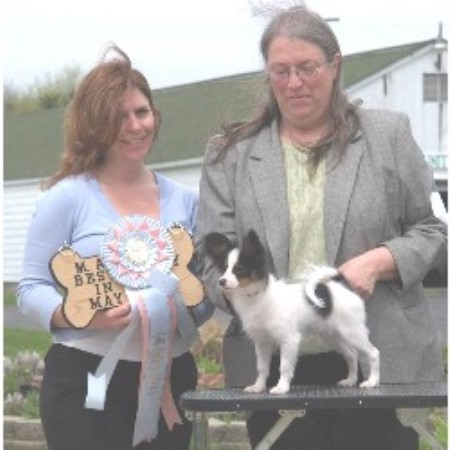 Papillon breeder Wyoming 9290