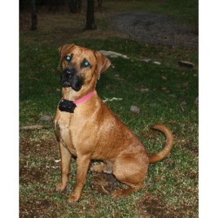 Cur Dog Rescue Florida