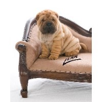 Tuck 'n Roll Acres Chinese Shar Pei
