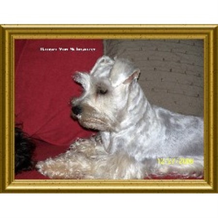 Miniature Schnauzer breeder in Alabama