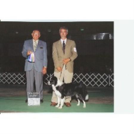 Allusive Dreams Bloodhounds Border Collie Breeder In