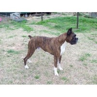 Texas Velhi Kennel