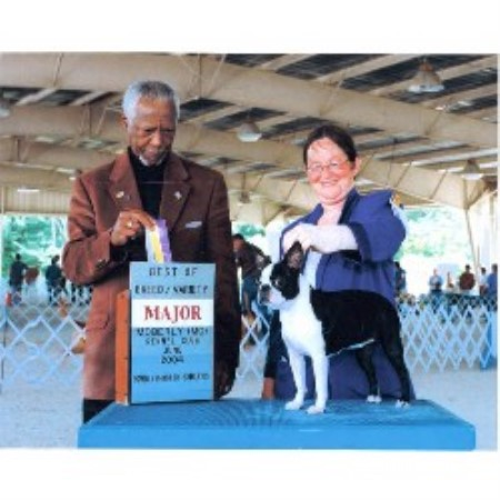 Bewitching Bostons Boston Terrier Breeder In Rosanky Texas
