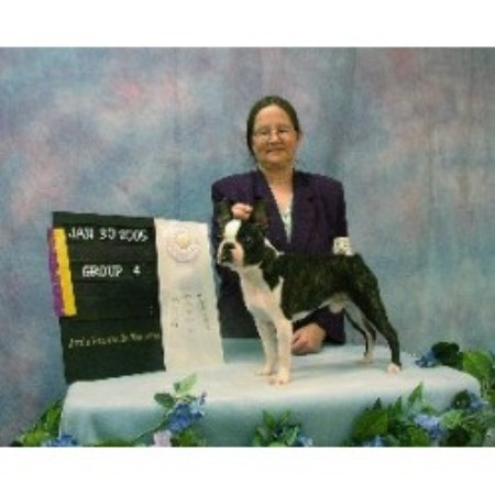 Boston Terrier breeder Rosanky 10120