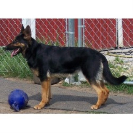 dog breeders in illinois