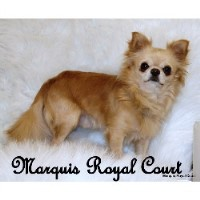 Marquis Royal Court