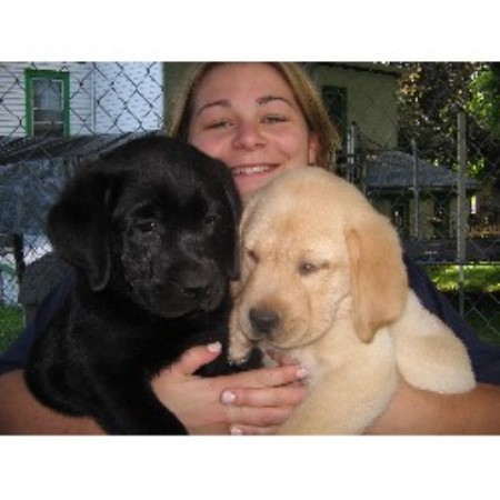 Labrador Retriever breeder Randolph 10626