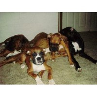 Rocky And Beatrice Bunch Of Boxers