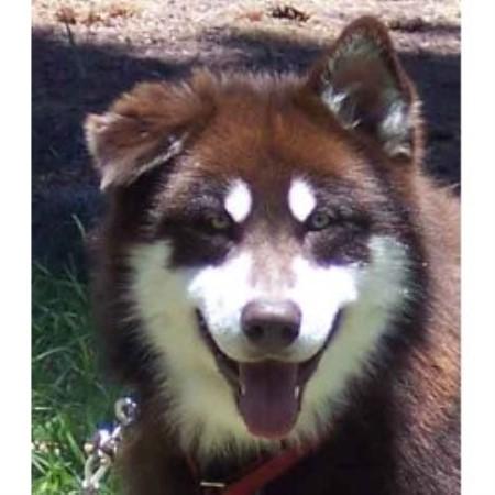 Whippet Dog Rescue Texas
