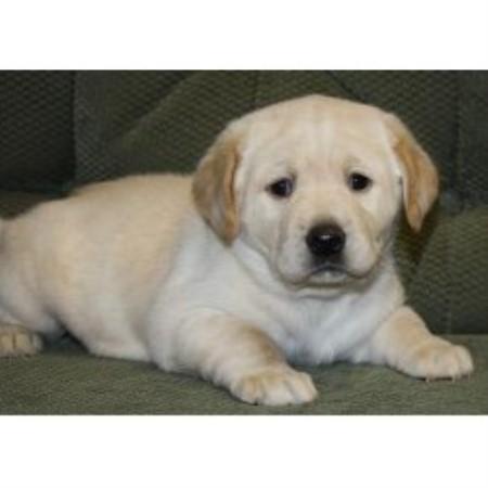 Central Pennsylvania Dog Rescue