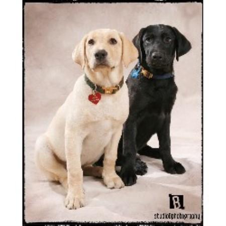 Diamond Dog Rescue Wisconsin