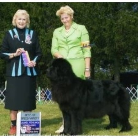 Newfoundland Dog breeder New Kensington 12037