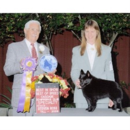 Dogs For Sale In Monterey County