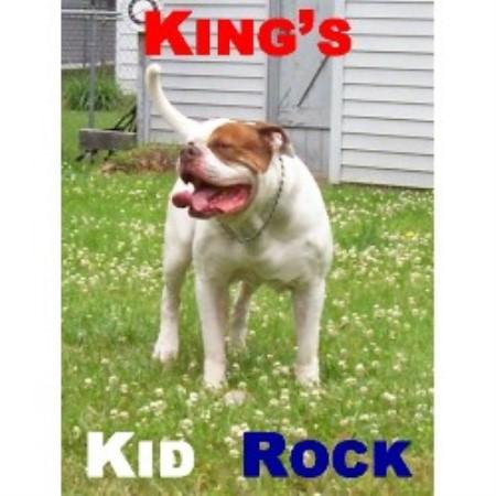 Kings American Bulldog, American Bulldog Breeder in Detroit