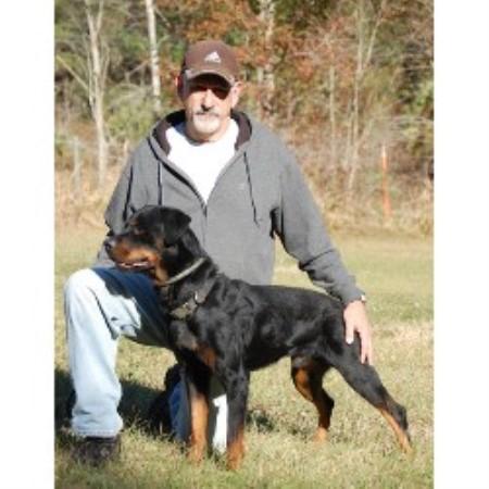 Fallhammer Rottweilers Rottweiler Breeder In Micanopy Florida
