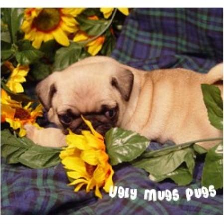 Ugly Mugs Pugs, Pug Br...