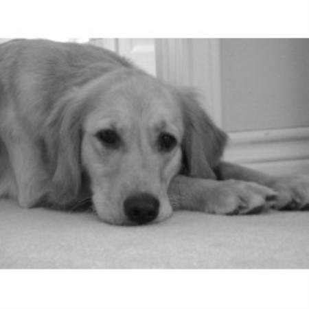 Daisy Dog Rescue Michigan