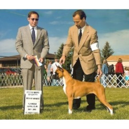 Boxer breedering kennel in Fruita