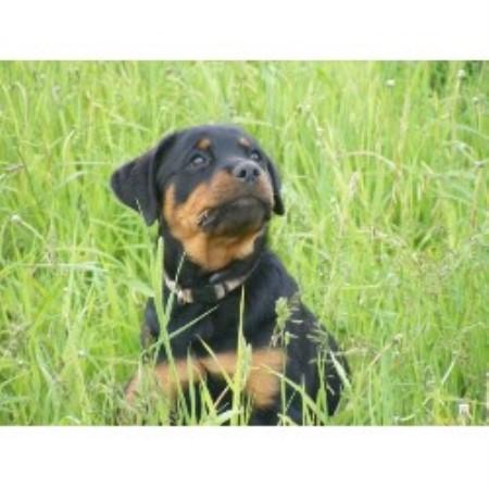 Dog Run For Sale Alberta