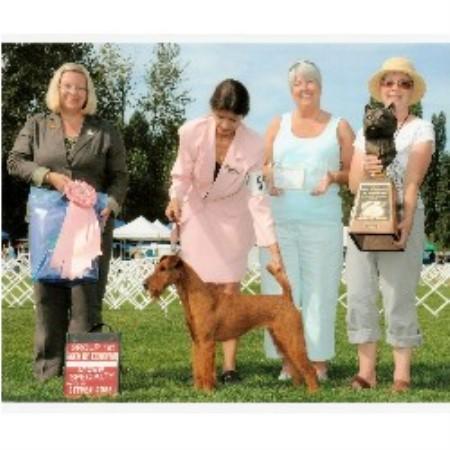 Irish Terrier accordin...