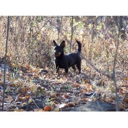 Dog Kennel Barrhead