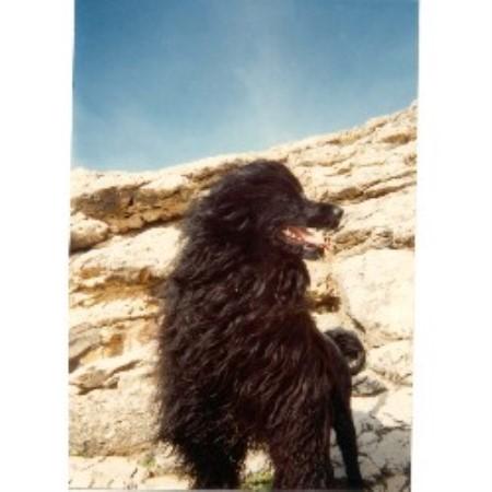 Augustine Kennels, Portuguese Water Dog Breeder in