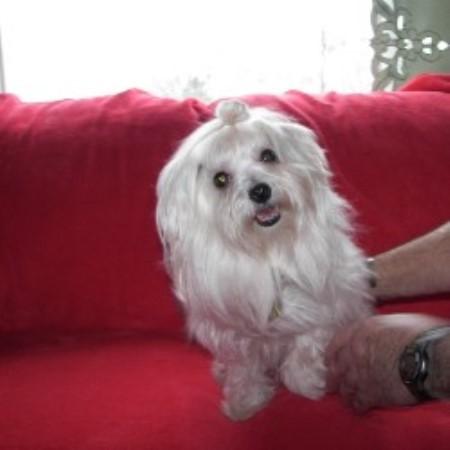 Petite Pups Maltese Breeder In Loganton Pennsylvania