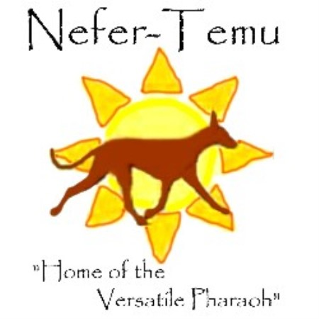 Nefer-Temu Pharaoh Hounds