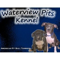 Waterview Pits Kennel