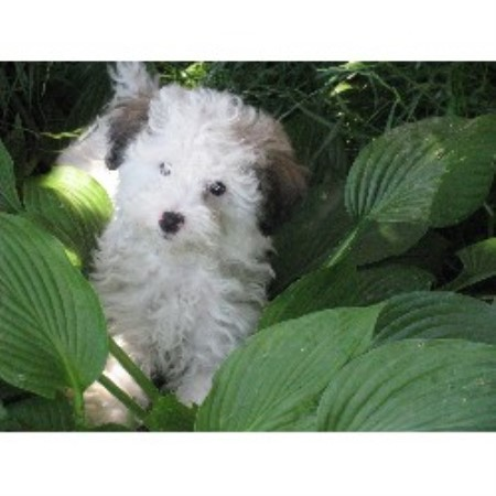 dogs puppies british columbia