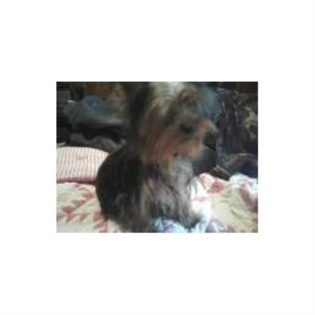 Small Breed Dog Rescue Knoxville