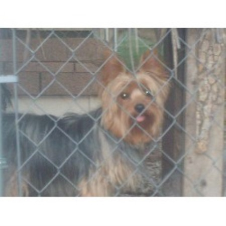 Small Breed Rescule Dogs Knoxvillet Tn