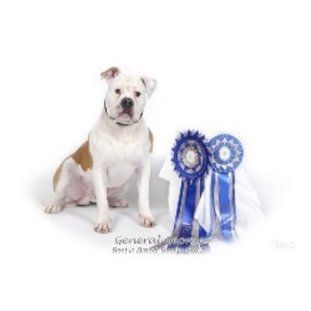 Free Dogs Burlington Ontario