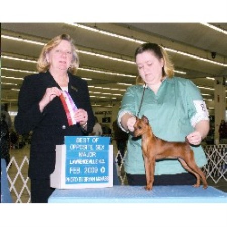 Miniature Pinscher breeder in North Carolina