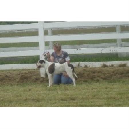 Bab Bulldogs, American Bulldog Breeder in Ravenswood, West Virginia