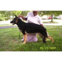 Sabians German Shepherds