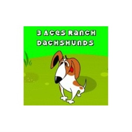 3 Aces Ranch Dachshunds California