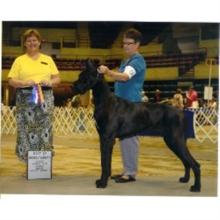 Great Dane breeder La Crosse 14298