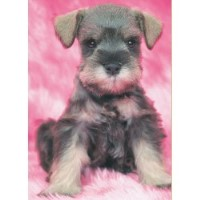 Miniature Schnauzer Breeders In Texas Page 1