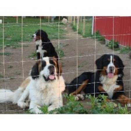 Comer S Cove Bernese Mountain Dog Breeder In West Milton