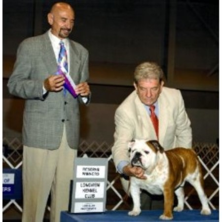 English Bulldog breeder Doddridge 14818