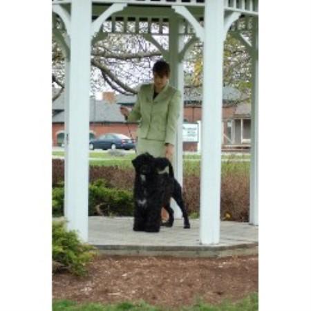 Dog Training Brewer Maine