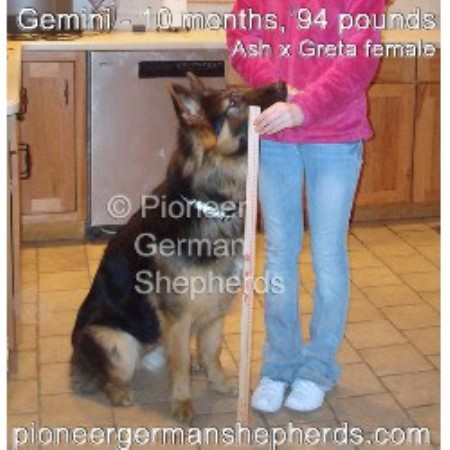Large Scale Dog Breeders Massachusetts