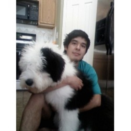 Old English Sheep Dogs For Sale