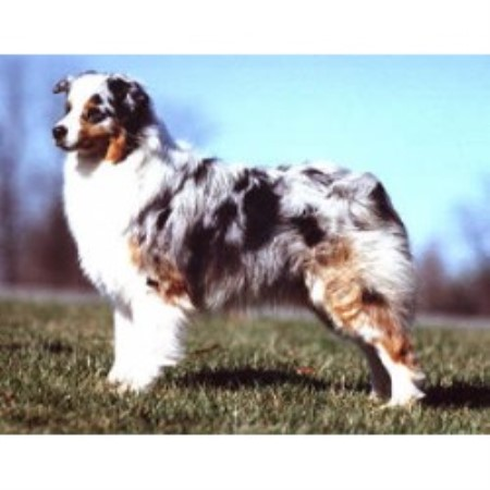 dog breeders in indiana